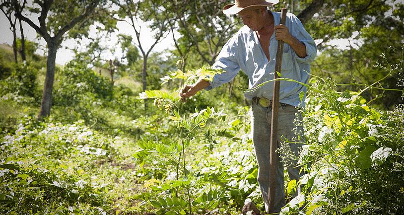 Projekt Mittelamerika Nicaragua Plan Vivo